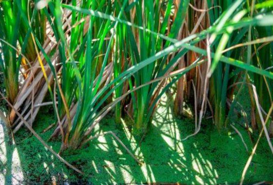 Plantas sanitarias de La Barquita: un modelo natural de drenaje sanitario